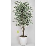 【送料無料】ベンジャミンツリー 斑入り (人工観葉植物) 高さ180cm 光触媒 (154B450)