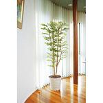【送料無料】ゴールデンリーフ (人工観葉植物) 高さ180cm 光触媒 (155B400)