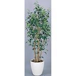 【送料無料】ワイルドベンジャミン (人工観葉植物) 高さ190cm 光触媒 (159A500)