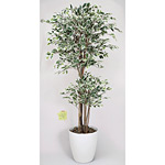 【送料無料】トロピカルベンジャミン 斑入り (人工観葉植物) 高さ180cm 光触媒 (167B480)