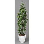 【送料無料】シンゴニューム (人工観葉植物) 高さ170cm 光触媒 (174A300)