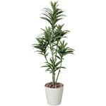 【送料無料】ドラセナコンパクタ (人工観葉植物) 高さ125cm 光触媒 (185A150)