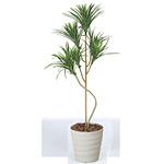 【送料無料】ユッカ (人工観葉植物) 高さ120cm 光触媒 (186A150)