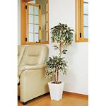 【送料無料】 斑入りベンジャミンダブル (人工観葉植物) 高さ120cm 光触媒 (192B180)