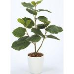 【送料無料】ウンベラータ (人工観葉植物) 高さ80cm 光触媒 (211A100)