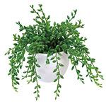 グリーンネックレス (人工観葉植物) 高さ15cm 光触媒 (234A30)