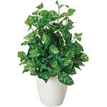 ピーコック (人工観葉植物) 高さ43cm 光触媒 (237A40)