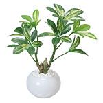 シェフレラポット (人工観葉植物) 高さ23cm 光触媒 (246A30)