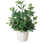 アイビー (人工観葉植物) 高さ40cm 光触媒 (248A40)