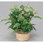 ミニポトス (人工観葉植物) 高さ24cm 光触媒 (265A20)