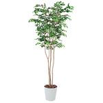 マウンテンアッシュ (人工観葉植物) 高さ210cm 光触媒 (351A550) (※送料見積り)