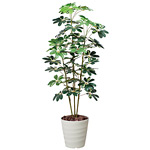 【送料無料】カポック 斑入り (人工観葉植物) 高さ150cm 光触媒 (355A200)