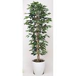 【送料無料】ベンジャミンスリム (人工観葉植物) 高さ160cm 光触媒 (356A280)
