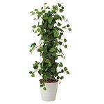 【送料無料】グレープツリー (人工観葉植物) 高さ150cm 光触媒 (359B350)