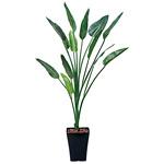 【送料無料】ストレチア (人工観葉植物) 高さ160cm 光触媒 (363A230)