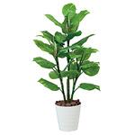 【送料無料】フレッシュポトス (人工観葉植物) 高さ115cm 光触媒 (367A160)