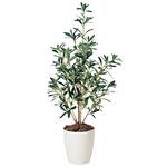 【送料無料】オリーブ (人工観葉植物) 高さ90cm 光触媒 (378A100)