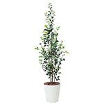 【送料無料】ベンジャミン2.0 屋外対応 光触媒加工無し (屋外用人工観葉植物) 高さ200cm (393A350)