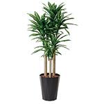 【送料無料】幸福の木 (人工観葉植物) 高さ180cm 光触媒 (401A380)