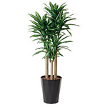【送料無料】幸福の木 1.8 (人工観葉植物) 高さ180cm 光触媒機能付 (401E400)