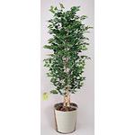 【送料無料】白樺 (人工観葉植物) 高さ180cm (幹:天然白樺) 光触媒 (402C700)