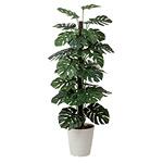 【送料無料】モンステラ (人工観葉植物) 高さ180cm 光触媒 (403A350)