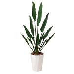 【送料無料】トラベラーズパーム (人工観葉植物) 高さ155cm 光触媒 (411A300)