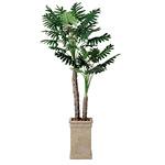 セローム (人工観葉植物) 高さ200cm 光触媒 (415A550) (※送料見積り)
