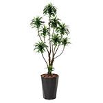 【送料無料】ドラセナコンパクタ (人工観葉植物) 高さ160cm 光触媒 (416A250)
