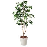 【送料無料】マウンテンアッシュ (人工観葉植物) 高さ130cm 光触媒 (424A200)