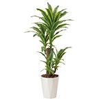 【送料無料】フレッシュドラセナ (人工観葉植物) 高さ125cm 光触媒 (428A200)
