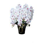 【送料無料】ロイヤル胡蝶蘭5本立W/AB (造花) 高さ80cm 光触媒 (447A300)