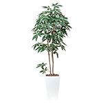 【送料無料】アートパキラ (人工観葉植物) 高さ180cm 光触媒 (506A480)