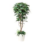 【送料無料】フィカスベンジャミン 植栽付 (人工観葉植物) 高さ180cm 光触媒 (508A450)