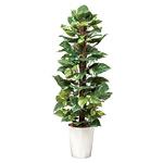 【送料無料】ポトス (人工観葉植物) 高さ135cm 光触媒 (511A250)