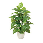 フレッシュポトスM (人工観葉植物) 高さ67cm 光触媒 (517A75)