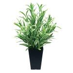 ツートンスパイダー (人工観葉植物) 高さ50cm 光触媒 (519A70)