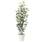 【送料無料】シェフレラツリー1.7 屋外対応 光触媒加工無し (屋外用人工観葉植物) 高さ170cm (531E350)