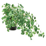 プムラ (人工観葉植物) 高さ25cm 光触媒 (557A50)