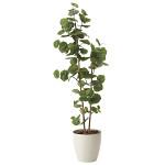 【送料無料】シーグレープ1.6 (人工観葉植物) 高さ160cm 光触媒機能付 (616A280)