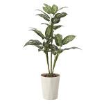 【送料無料】ディフェンバキア90 (人工観葉植物) 高さ90cm 光触媒 (619A120)