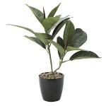 ゴムの木 (人工観葉植物) 高さ47cm 光触媒 (637A50)