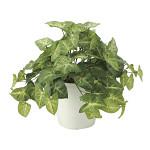 フレッシュカラージューム (人工観葉植物) 高さ30cm 光触媒 (643A50)