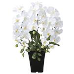 プリンセス胡蝶蘭W (造花) 高さ56cm 光触媒 (662A50)