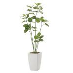 【送料無料】アーバンブランチウンベラータ (人工観葉植物) 高さ190cm 光触媒 (712A650)