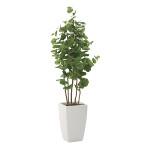 【送料無料】アーバンシーグレープ (人工観葉植物) 高さ180cm 光触媒 (713A600)