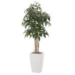 【送料無料】アーバンパキラ (人工観葉植物) 高さ180cm 光触媒 (717A550)