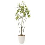 【送料無料】フィカスブランチツリー (人工観葉植物) 高さ130cm 光触媒 (723A180)
