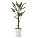 【送料無料】ストレチア (人工観葉植物) 高さ160cm 光触媒 (729A250)