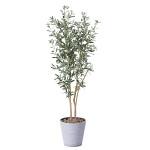 【送料無料】オリーブ (人工観葉植物) 高さ160cm 光触媒 (814A330)